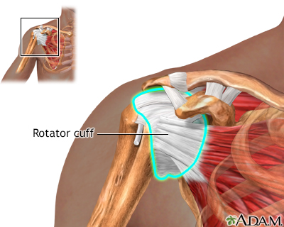 Normal rotator cuff