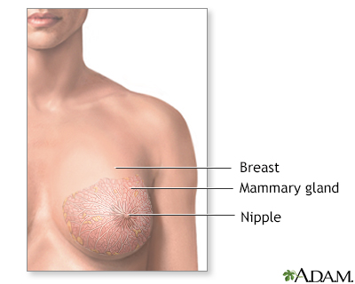 female breast pictures